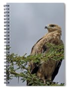 Tawny Eagle Spiral Notebook