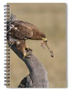 Tawny Eagle With Prey Spiral Notebook