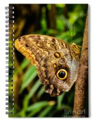 Tawny Owl Butterfly Spiral Notebook
