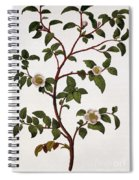 Tea Branch Of Camellia Sinensis Spiral Notebook