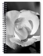 Tea Rose 01 - Infrared Spiral Notebook
