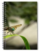 Teal Dragonfly Spiral Notebook