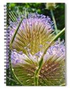 Teasel Thistle - Dipsacus Fullonum  Spiral Notebook