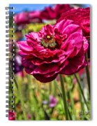 Tecolote Ranunculus Flowers By Diana Sainz Spiral Notebook