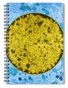 Tem Of Leydig Cell Spiral Notebook