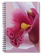 Temptation - Pink Cymbidium Orchid Spiral Notebook