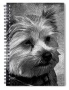 Terrier - Dog - Playing With Light Spiral Notebook
