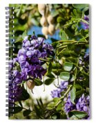 Texas Mountain Laurel Sophora Flowers And Mescal Beans Spiral Notebook