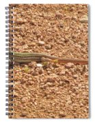 Texas Striped And Spotted Whiptail Lizard Spiral Notebook