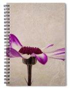 Texturised Senetti Pericallis Spiral Notebook