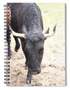That Ain't No Bull Spiral Notebook
