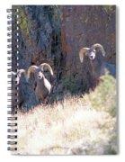 The 3 Amigos Spiral Notebook
