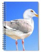 The Admiral 2  Spiral Notebook