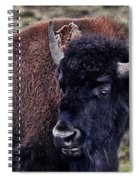 The American Bison Spiral Notebook