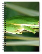 The American Green Tree Frog Spiral Notebook