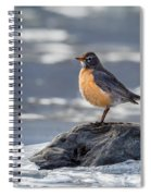 The American Robin Square Spiral Notebook