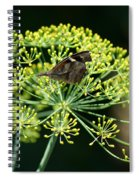 The American Snout Butterfly Spiral Notebook