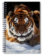The Amur Tiger Spiral Notebook