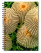 The Ants Raised Their Umbrellas Spiral Notebook