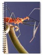 Garden Assassin Bug Spiral Notebook