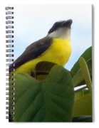 The Banaquit Of Costa Rica Spiral Notebook