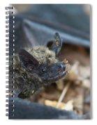 The Bat Spiral Notebook