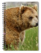 The Bear Dry Brushed Spiral Notebook