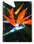 The Beauty Of A Bird Of Paradise Spiral Notebook