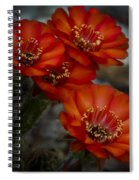 The Beauty Of Red Spiral Notebook