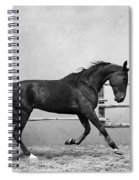 The Beauty Of The Horse Spiral Notebook