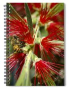 The Bee And Bottlebrush Spiral Notebook