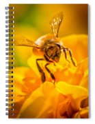 The Bee Gets Its Pollen Spiral Notebook
