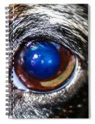 The Big Eye Spiral Notebook
