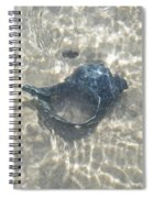 The Black Seashell Spiral Notebook