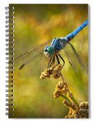 The Blue Dragonfly  Spiral Notebook