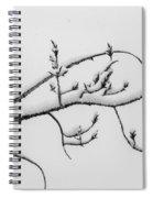 The Branch Of Art Spiral Notebook