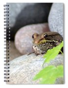 The Bronze Frog Spiral Notebook