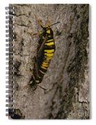 The Bug Spiral Notebook