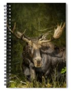 The Bull Moose Spiral Notebook