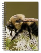 The Bumble Bee.. Spiral Notebook