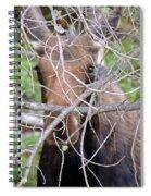 The Calf Spiral Notebook