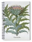 The Cardoon, From The Hortus Spiral Notebook