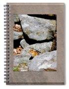 The Chipmunk Spiral Notebook