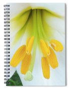 The Christmas Lilly Spiral Notebook