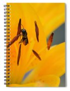 The Collector 7456 Spiral Notebook