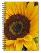 The Color Of Summer - Sunflower Spiral Notebook