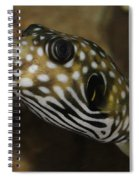 The Colorful Fish Spiral Notebook