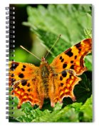 The Comma -- Polygonia C-album Spiral Notebook