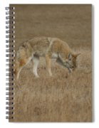 The Coyotes Spiral Notebook