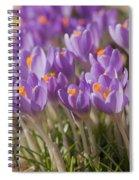 The Crocus Flowers  Spiral Notebook